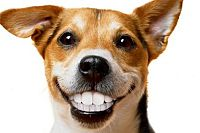 Preventing doggy dental disease in August