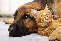 Benefits Of Allowing Pets In Your Rental Property