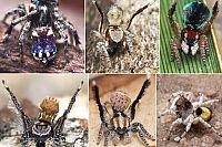 Five new species of spider found living in Brisbane