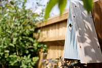 Tips for attracting wildlife to your garden
