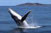 Heavy congestion on Qld's humpback highway