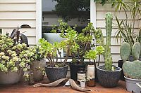 How to have a garden when you're a renter