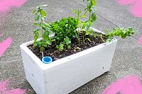 Turn a Styrofoam box from the grocers into a self-watering planter pot